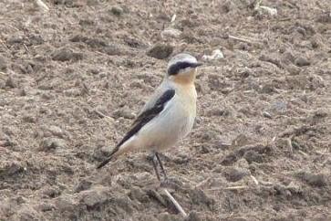 Vogelexcursie Kennemerduinen, de vogeltrek. Vrijdag 10 september 2021, 8.30 u